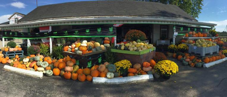 Talbotville Berry Farm